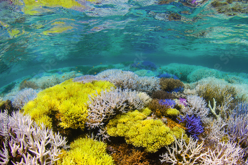Photo sur Toile Recifs coralliens Fluorescing coral reef