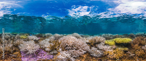 New Caledonia fluorescing coral reef panorama