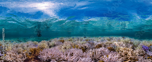 Poster Coral reefs New Caledonia fluorescing coral reef panorama