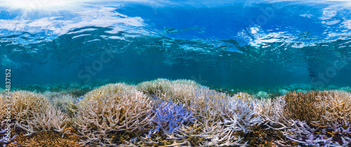 Canvas Prints Coral reefs New Caledonia fluorescing coral reef panorama