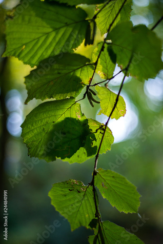 Photo Branche d'arbre avec feuilles vertes au printemps Nature/Tree branch with green