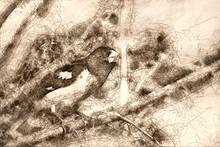 Sketch Of Rose-Breasted Grosbe...