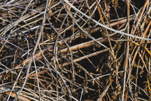 Close Up Pile Of Dry Wooden Tw...