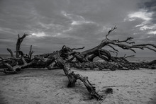 Powerful Tree On The Beach