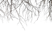 Dry Bare Branches Isolated On White Background