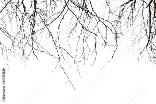 Dry bare branches isolated on white background Canvas Print