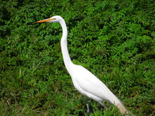 Lost Coast Big Bird