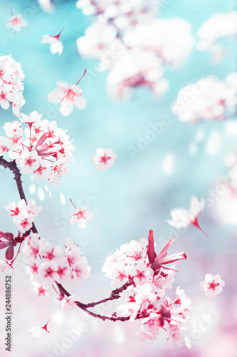 Autocollant pour porte Fleur de cerisier Natural spring and summer background. Delicate white and pink cherry flowers in the spring garden.