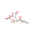 Small branch of tree with fresh pink flowers. Nature and flora theme. Detailed flat vector design