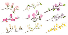 Set Of Flowering Branches With Small Flowers And Green Leaves. Twigs Of Fruit Trees. Detailed Flat Vector Icons