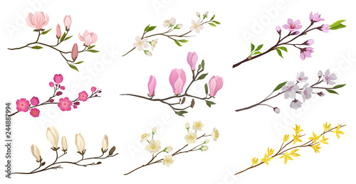 Fotografia Set of flowering branches with small flowers and green leaves