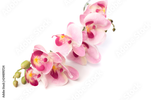 Orchidée beautiful pink Phalaenopsis orchid flowers, isolated on white background - Image.