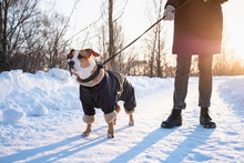 Walking With A Dog In Coat On ...