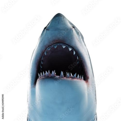 Cuadros en Lienzo 3d rendered illustration of a great white shark