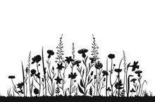 Wildflower Silhouettes. Wild Grass Spring Field. Herbal Summer Vector Background. Wildflower On Meadow, Botanical Plant Black Silhouette Illustration