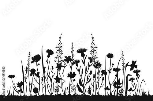 Wildflower silhouettes. Wild grass spring field. Herbal ...