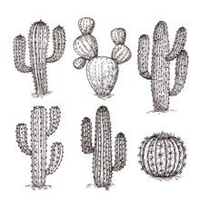 Sketch Cactus. Hand Drawn Desert Cactuses. Vintage Engraving Western Mexican Plants Vector Set. Desert Cactus Collection, Engraving Tropical Cacti Illustration