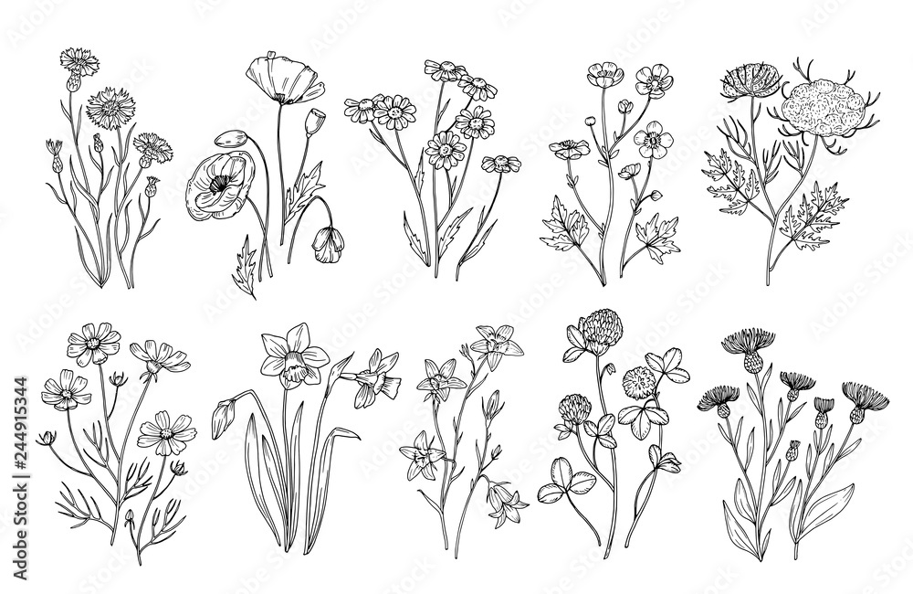 Fototapeta Wild flowers. Sketch wildflowers and herbs nature botanical elements. Hand drawn summer field flowering vector set. Illustration of floral field, wild flower white black line