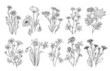 Wild flowers. Sketch wildflowers and herbs nature botanical elements. Hand drawn summer field flowering vector set. Illustration of floral field, wild flower white black line
