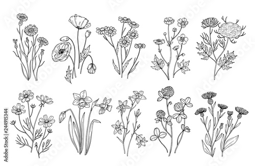 fototapeta na ścianę Wild flowers. Sketch wildflowers and herbs nature botanical elements. Hand drawn summer field flowering vector set. Illustration of floral field, wild flower white black line