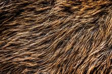 Boar Fur Texture