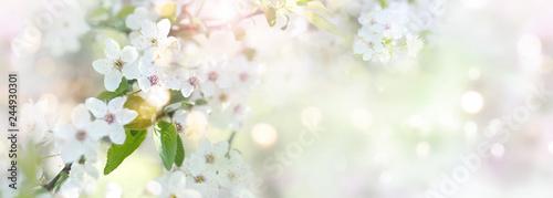Cadres-photo bureau Fleur de cerisier Spring time with cherry blossoms