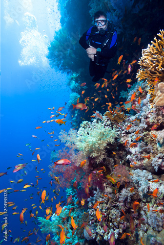 Scuba Diver explores beautiful coral reef.