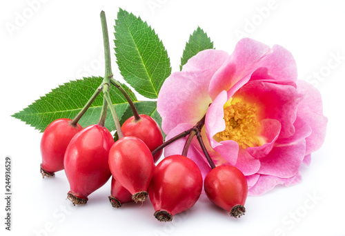 Obraz Rose hips with rose leaves isolated on a white background. - fototapety do salonu