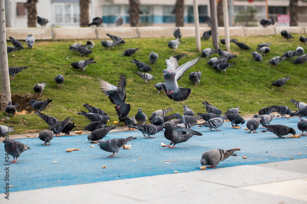 Pigeon and City