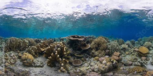Foto op Plexiglas Koraalriffen Coral reef Manado Indonesia