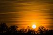canvas print picture - Schöner Sonnenuntergang mit Baumschattenbild. Gelb farbige schöne Naturszene des Himmels