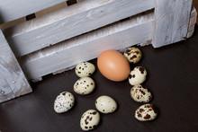 Chicken Egg Among Quail Eggs. ...
