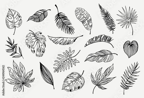 Set Of Outline Tropical Leaves Hand Drawn Illustration Converted To Vector Buy This Stock Vector And Explore Similar Vectors At Adobe Stock Adobe Stock Tropical palm leaves,branches set.outline,green | leaf. set of outline tropical leaves hand