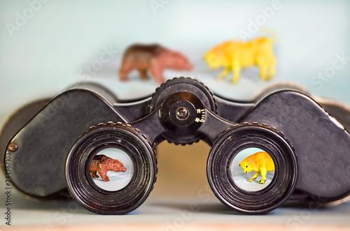 Fotografie, Obraz  Binoculars Looking at a Bear and Bull