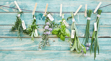 Bunches Of Assorted Fresh Green Culinary Herbs
