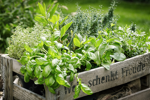 In de dag Tuin Wooden crate with variety of potted culinary herbs
