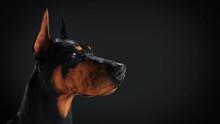 Headshot Side View Of Doberman...