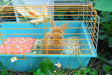 Decorative Rabbit In A Cage In...