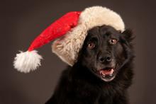 Santa Blackdog