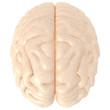 High Resolution 3D real brain
