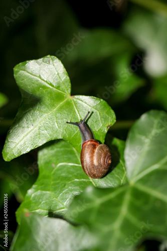Schnecke auf Blätter