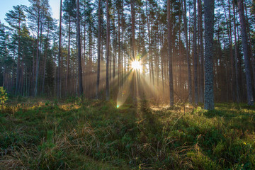 natural sun light rays shining through tree branches in summer morning