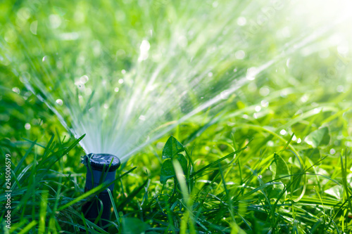 Obraz Lawn water sprinkler spraying water over lawn green fresh grass in garden or backyard on hot summer day. Automatic watering equipment, lawn maintenance, gardening and tools concept. - fototapety do salonu