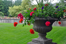Stone Planter With Red Begonia...
