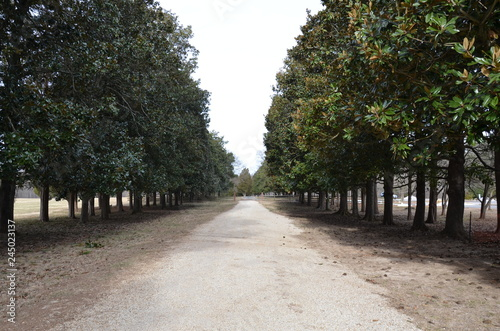 Fotografie, Obraz  long gravel driveway lined with green trees