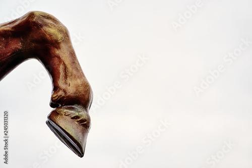 Fotografia Horse leg with hoof on white background