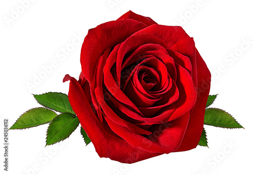 Foto auf Gartenposter Roses Fresh beautiful rose isolated on white background with clipping path