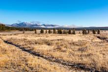 Prairie Grasses Yellowstone National Park