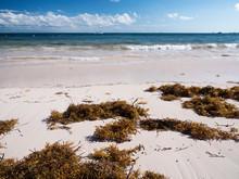 Tropical Beach With Sargassum Algae