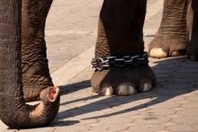 Elephant Feet Close Up